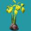 ORN Yellow Mangrove Propagule