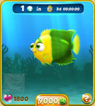Yellow-Green Bicolor Angelfish