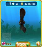 Black Dusky Batfish
