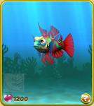 Red Mandarinfish