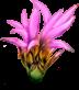 File:UI VIT Rare Plants.png
