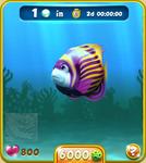 Violet Emperor Angelfish