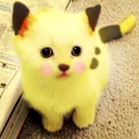 File:Pika.jpeg
