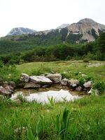 Bulino vrelo ispod vrhova Šatora - 23264332