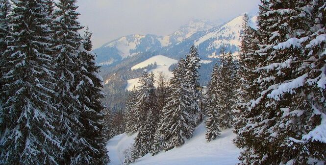 AlpineClan