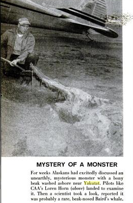 File:Mysteryofamonster.png