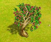 EucalyptusFull