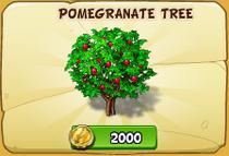 Pomegranate in store