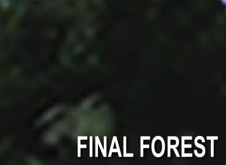 File:FinalForest.jpg