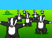 Badger Song