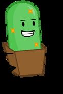 Cactus-idle