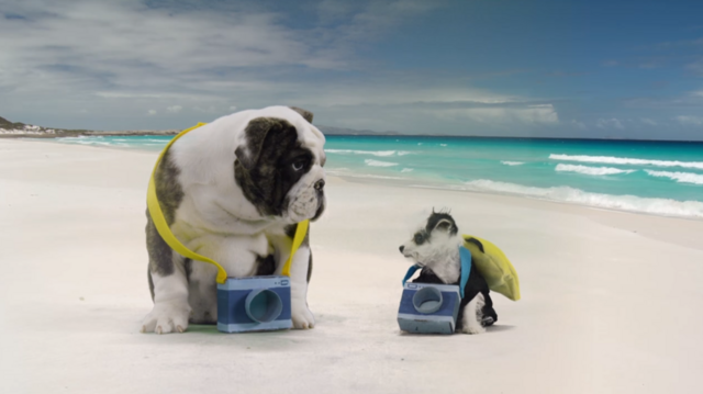 File:Nick Jr. Puppies Doggie Days of Summer Characters.png