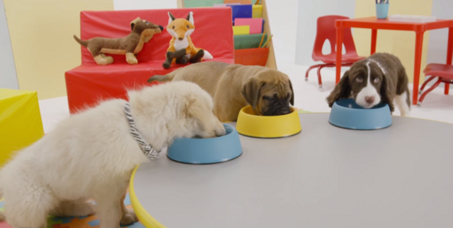 File:Nick Jr. Puppies CJ and Pete - Snack Time.png