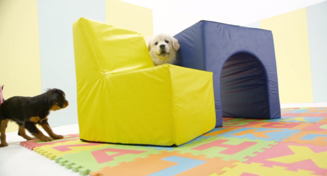 File:Nick Jr. Puppies CJ and Clancy - Gym Class.png