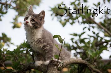 Starlingkit