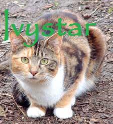 Ivystar
