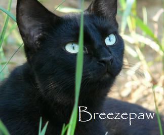 Breezepelt