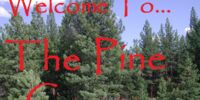 The Pine Copse