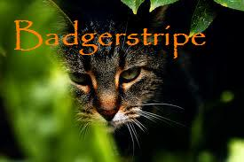 File:Badgerstripe.jpg
