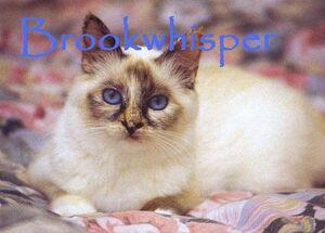 Brookwhisper