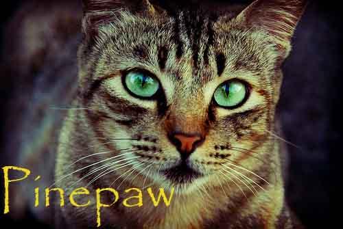 Pinepaw