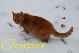 Glowpaw