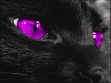 Black-cat-with-purple-eyes-black-cat-with-yellow-eyes-black-cat