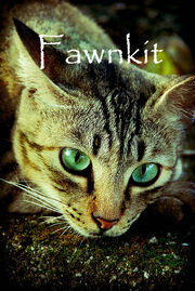 Fawnkit