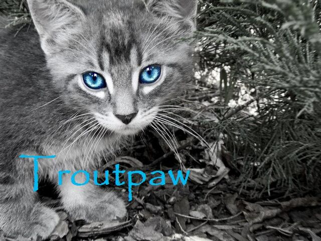 File:Troutpaw.jpg