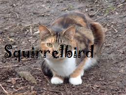 Squirrelbird