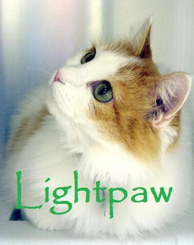 File:Lightpaw.jpg