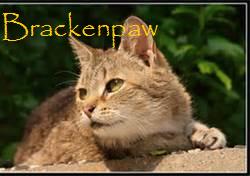 Brackenpaw