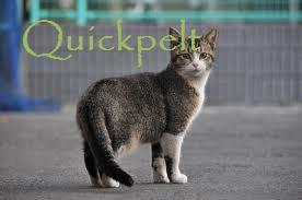 File:Quickpelt.jpg
