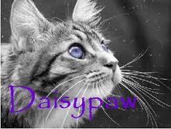 Daisypaw