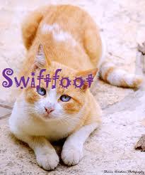 Swiftfoot