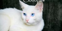 Cloudpaw