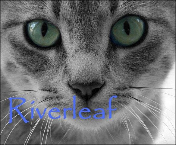 File:Riverleaf.jpg