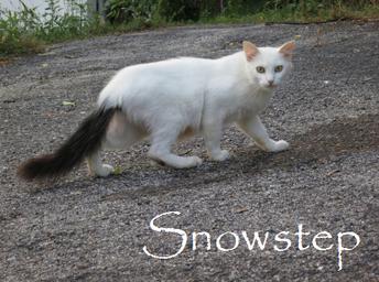Snowstep