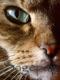 Sagepaw
