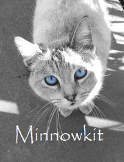 Minnowkit (2)