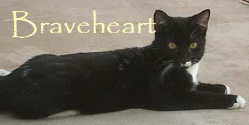 File:Braveheart.jpg