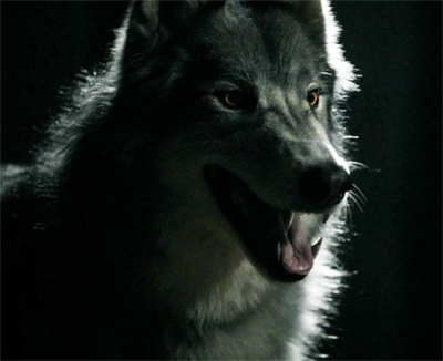 File:Wolf Form.png