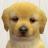 Nintendogs icon