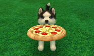 Husky with pizza disk