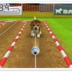 File:Competition Dog chasing ball (2).jpg
