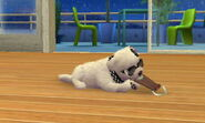 -Nintendogs Cats- 011