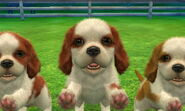 3DS pictures 476