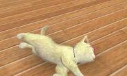 Nintendogs + Cats 242