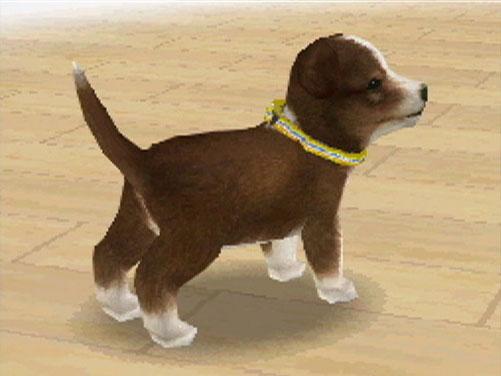 File:ShetlandSheepdog.jpg