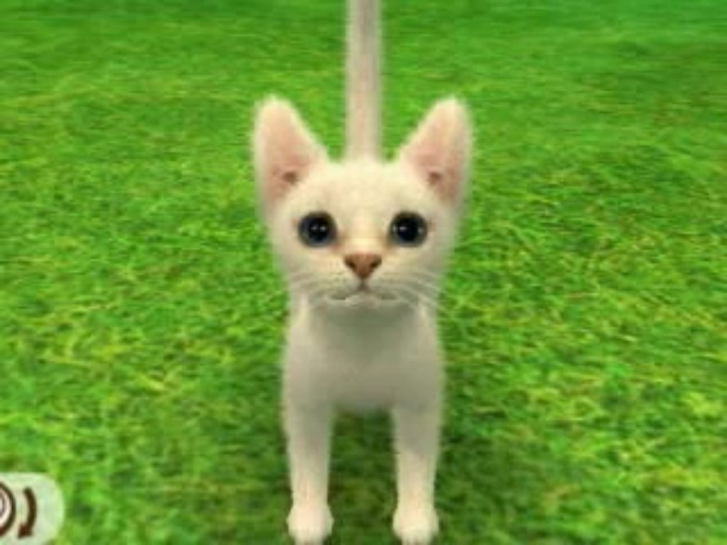 Cat Breeds | Nintendogs Wiki | FANDOM powered by Wikia